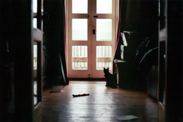 Tammy Kafka - RIP