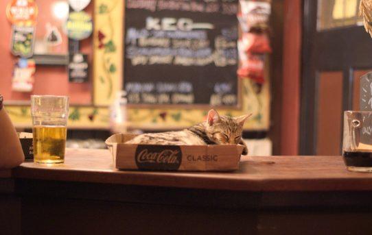 Coca-Kitten