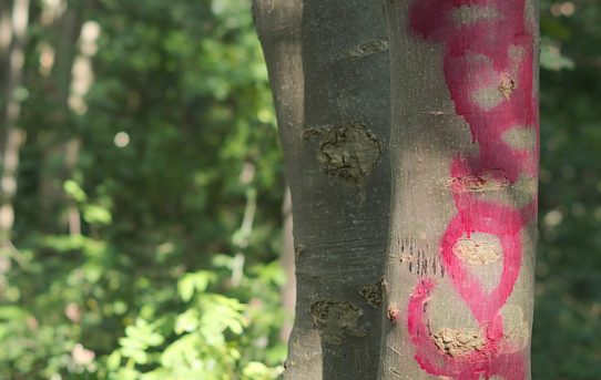 Tree Tagging